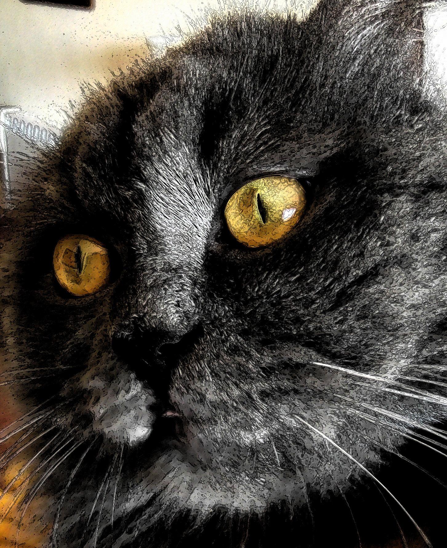 Ilustración gratis - Gato negro de ojos amarillos fuego
