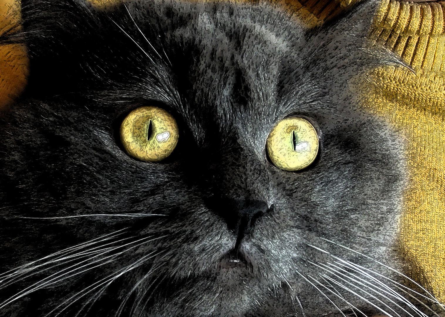 Ilustración gratis - Gato persa de ojos amarillos