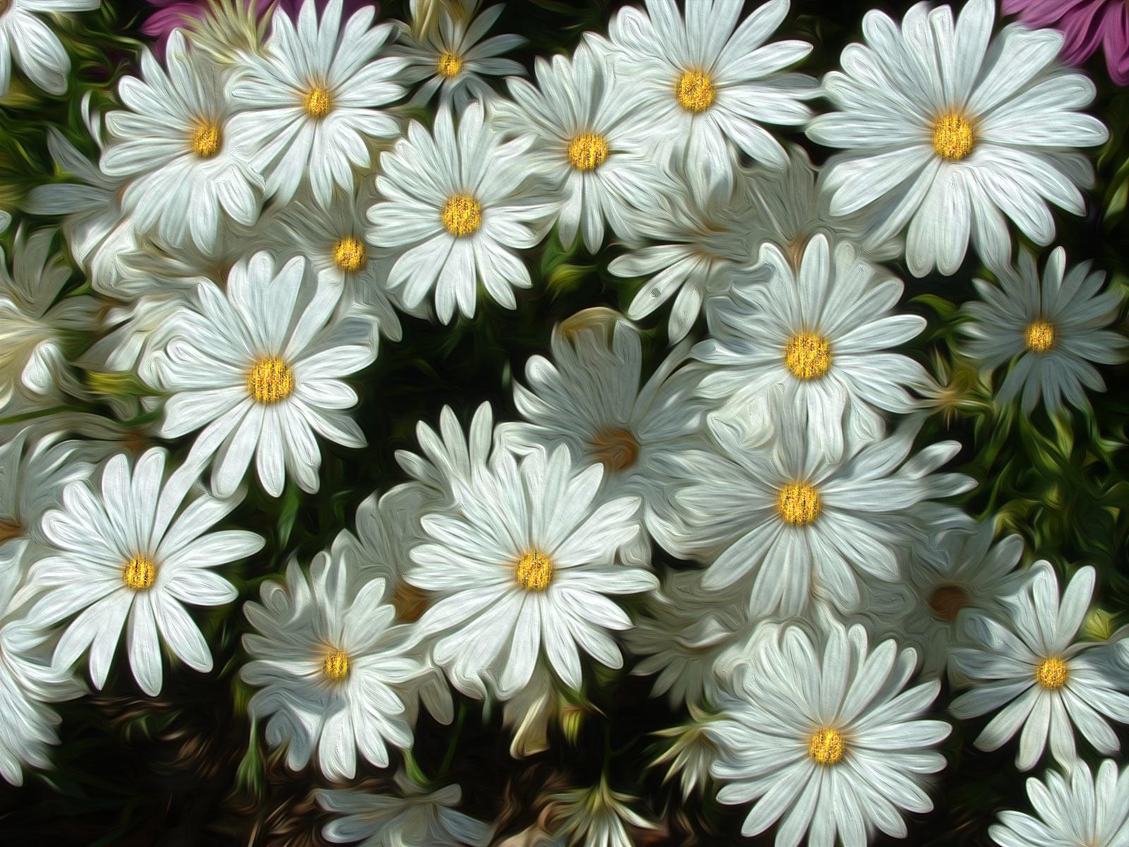 pintura Flores Margaritas blancas