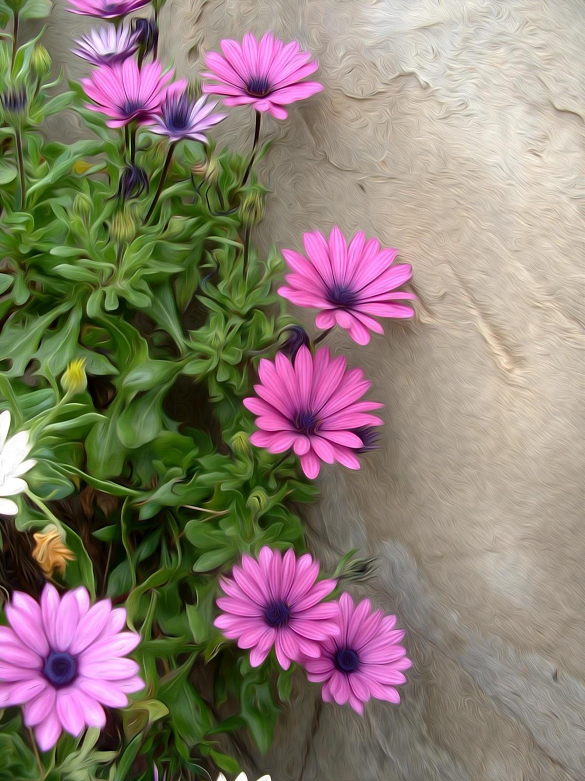 Flores Margaritas violetas